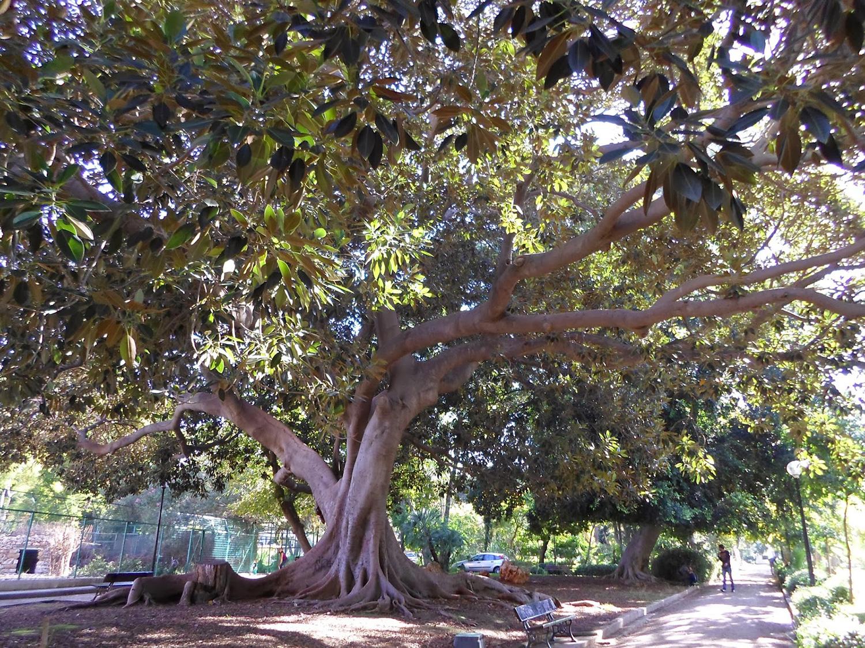 Tree Inside the gardens