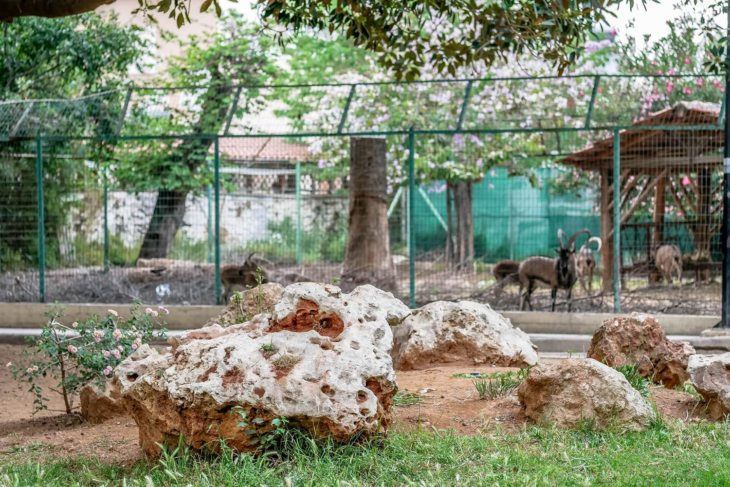 zoo of the gardens