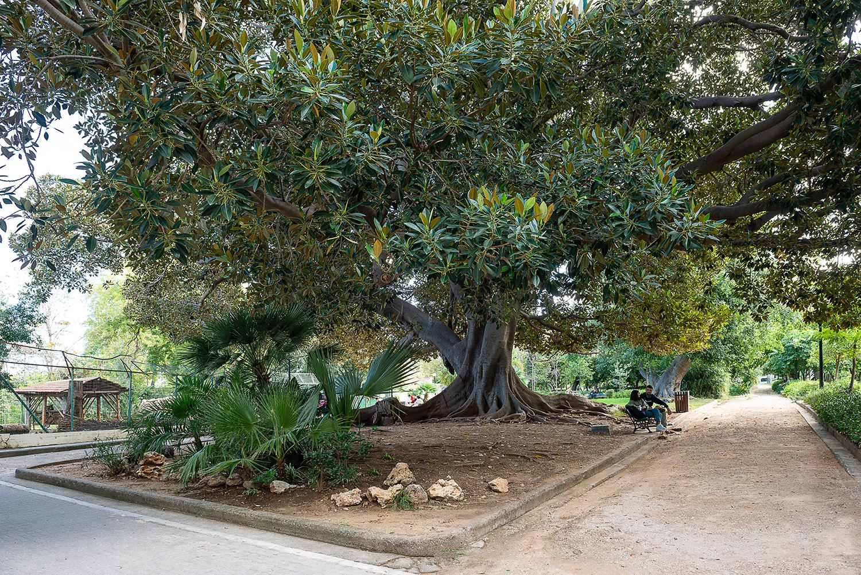 Tree of the garden