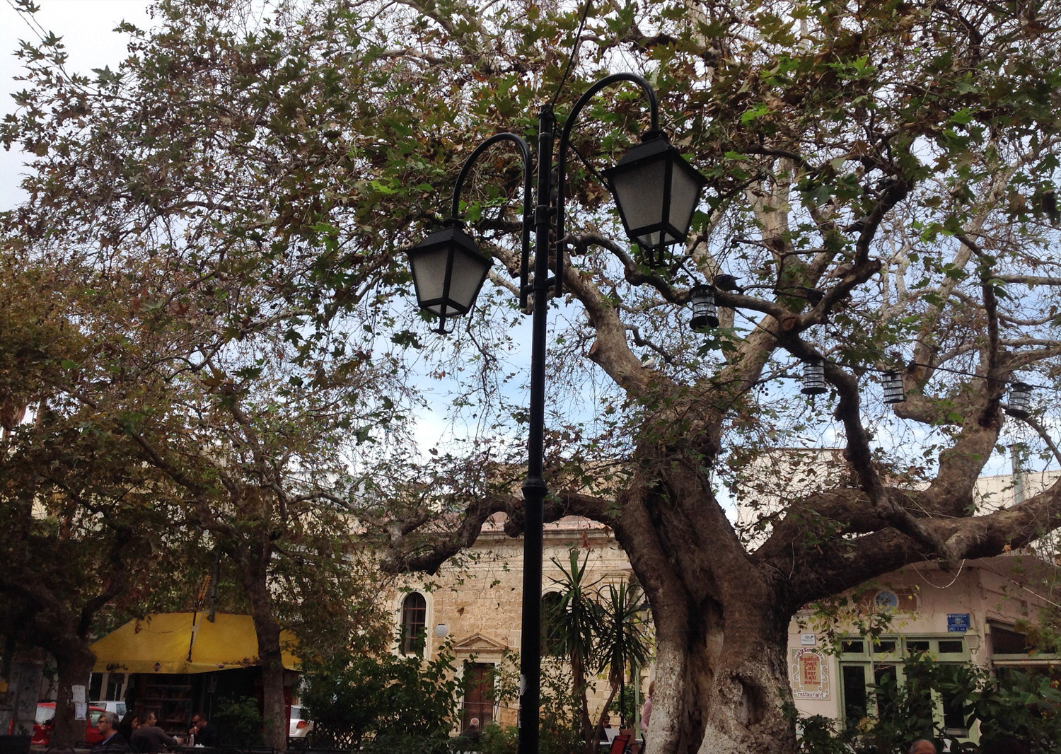 Old tree at splangia square